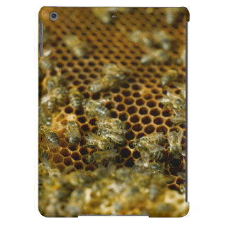 Bees In Hive, Western Cape, South Africa iPad Air Covers