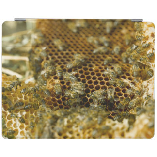 Bees In Hive, Western Cape, South Africa iPad Cover