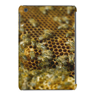 Bees In Hive, Western Cape, South Africa iPad Mini Case