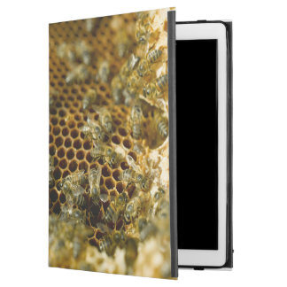 "Bees In Hive, Western Cape, South Africa iPad Pro 12.9"" Case"