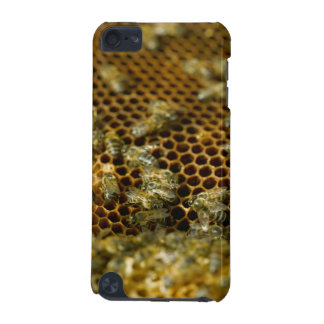 Bees In Hive, Western Cape, South Africa iPod Touch (5th Generation) Covers