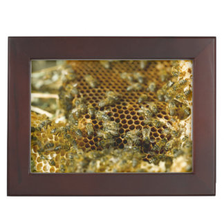 Bees In Hive, Western Cape, South Africa Keepsake Box