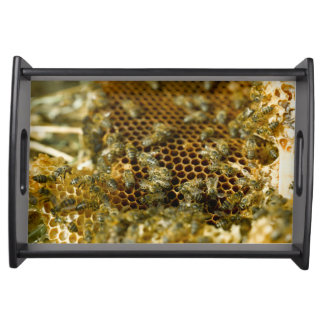 Bees In Hive, Western Cape, South Africa Serving Tray