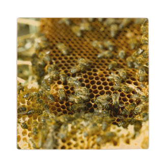 Bees In Hive, Western Cape, South Africa Wood Coaster