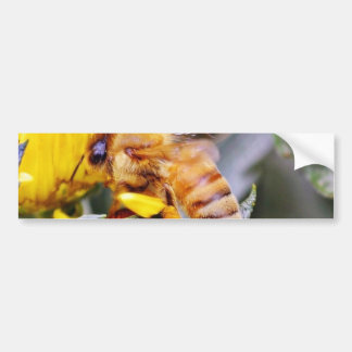 Bees Insects 3 Bumper Sticker
