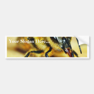 Bees Insects Bumper Sticker