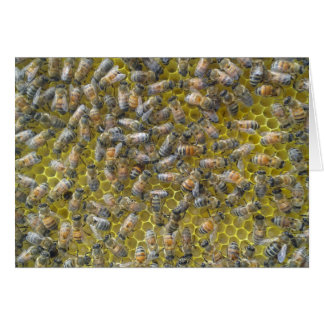 bees on honeycomb card