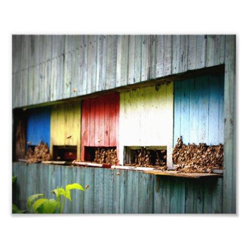 Bees Photo Art