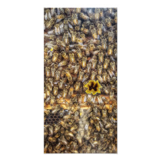 Bees Photo Print