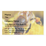 Bees Pollen Insects Wings Macro Bugs Business Cards