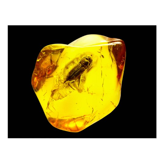 Beetle amber inclusion postcard