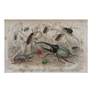 Beetle Antique Lithographic print