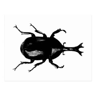 Beetle Beetles Insect Bug Vintage Wood Engraving Postcard