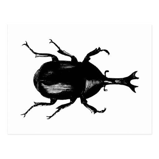 Beetle Beetles Insect Bug Vintage Wood Engraving Post Cards