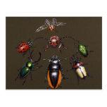 Beetle Circle of Fantasy Post Cards