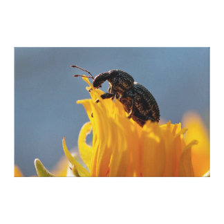 Beetle Feeding On A Yellow Daisy Flower Canvas Print