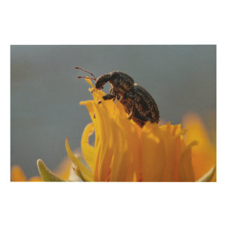 Beetle Feeding On A Yellow Daisy Flower Wood Wall Decor