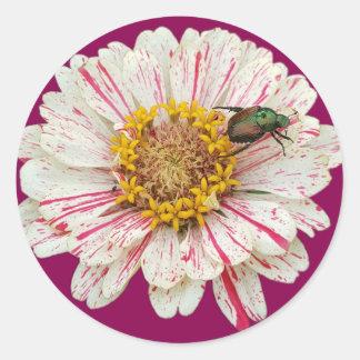 Beetle Flower Classic Round Sticker