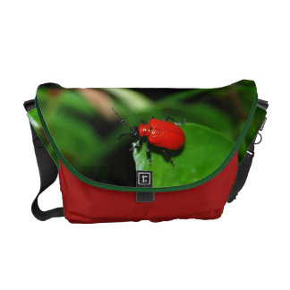Beetle glad red color in the green leaf courier bags