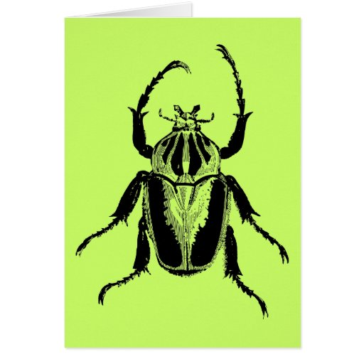 Beetle Insect Bug Vintage Wood Engraving Card