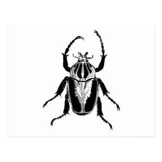 Beetle Insect Bug Vintage Wood Engraving Postcard
