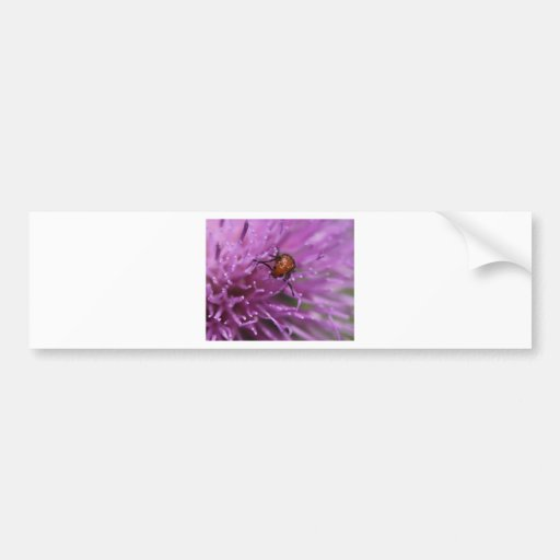 Beetle on a Milk Thistle Bumper Stickers