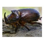 Beetle Post Card