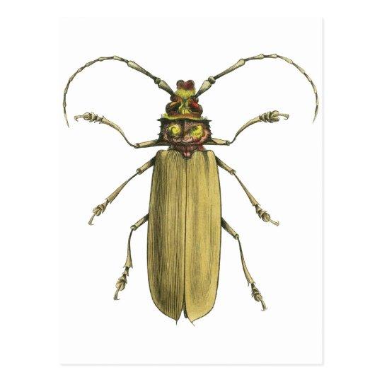 Beetle, Prionus Corticinus Postcard