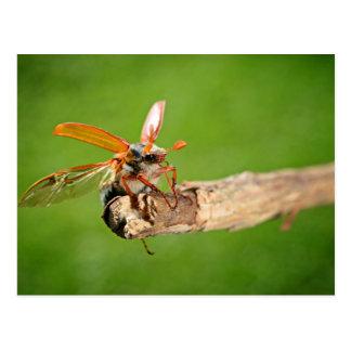 Beetle Subject Postcard
