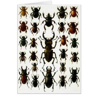 Beetles, beetles, beetles coleoptera pattern card