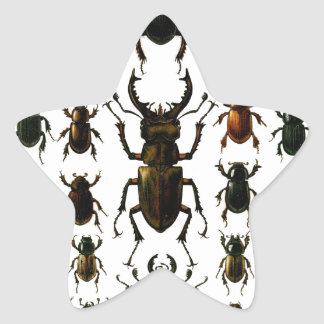 Beetles, beetles, beetles coleoptera pattern star sticker
