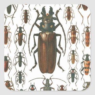 Beetles Beetles, so many beetles pattern picture. Square Sticker