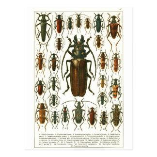 beetles postcard