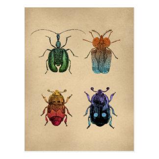 Beetles Vintage Illustration Postcard