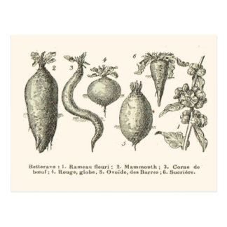 Beetroot types postcard