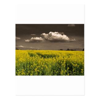 Before The Harvest.jpg Postcard