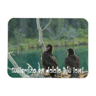 BEG Bald Eagle Grooming Rectangular Photo Magnet