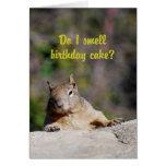 Begging Squirrel Happy Birthday