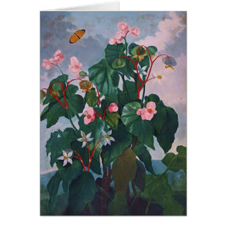 Begonia and Butterfly Card