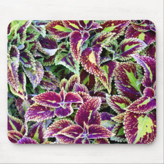 Begonia Leaves Mouse Mat