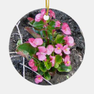 Begonia Ornament
