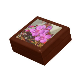 Begonias gift box - choose color & size