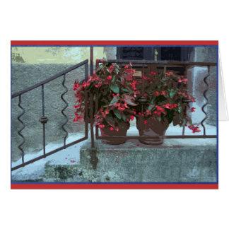Begonias in Ljubjlana Card