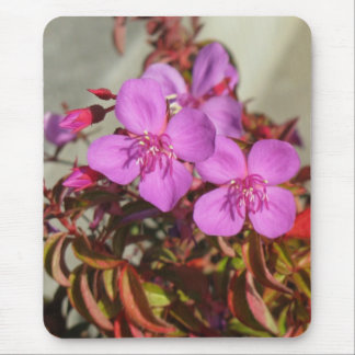 Begonias mousepad