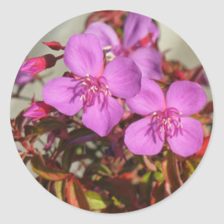 Begonias stickers