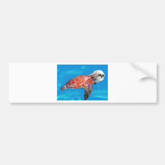 Behold the turtle Painting.jpg Bumper Sticker