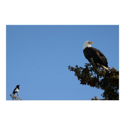 BEIAM Bald Eagle Ignores a Magpie Print