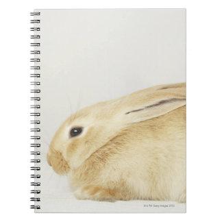 Beige bunny rabbit on white background 4 notebooks