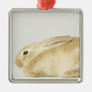 Beige bunny rabbit on white background 4 Silver-Colored square decoration