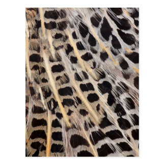 Beige Spotted Feather Abstract Postcard